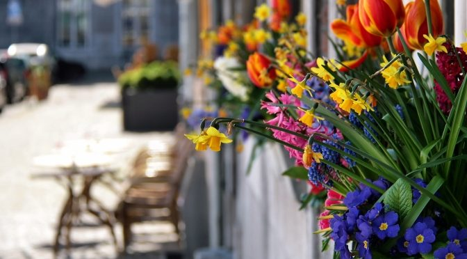Maastricht street in the sun with flowers