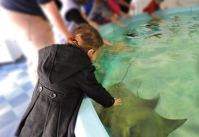Discover Underwater Wonders at Nausicaá Aquarium